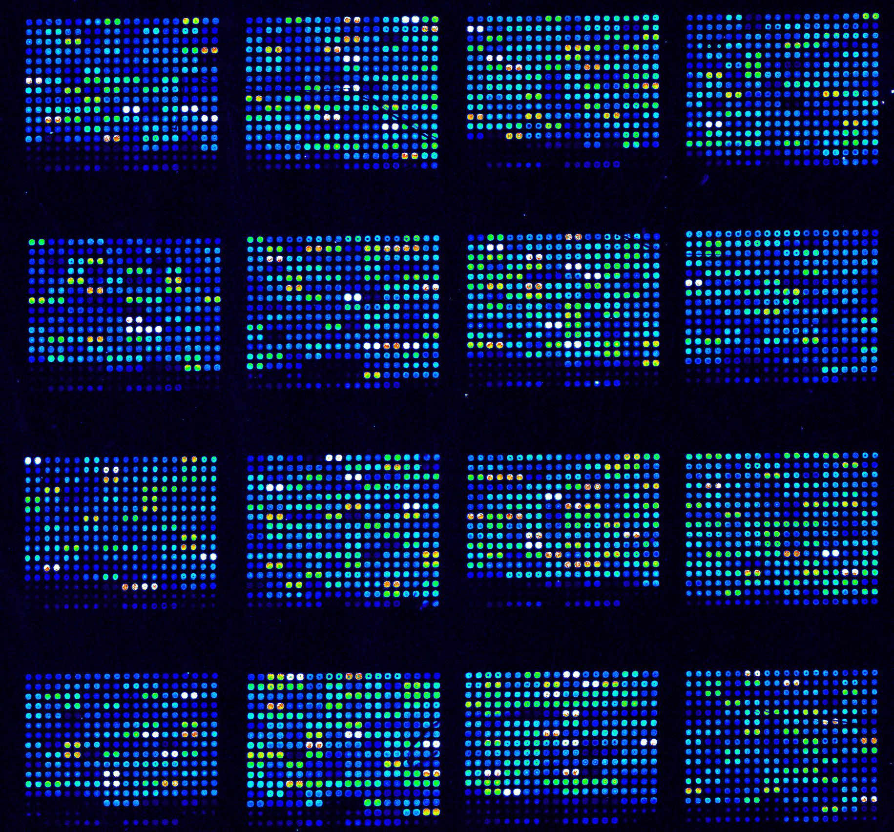 image surface microarray kit